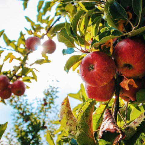Výroba domácích ovocných vín