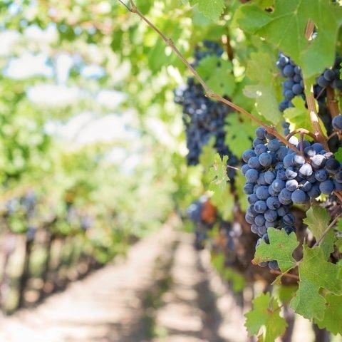 Červené víno a zdraví