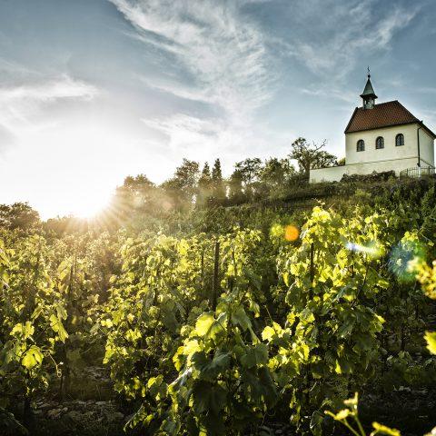 10 nejznámějších českých a moravských vinobraní