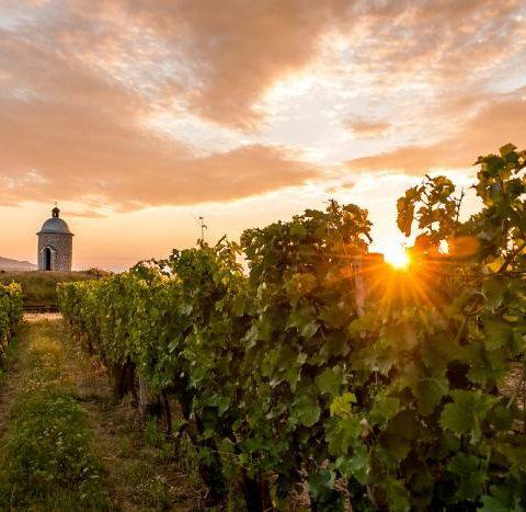 Vinařství Velké Bílovice