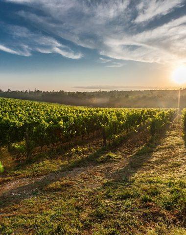Měření cukernatosti vína