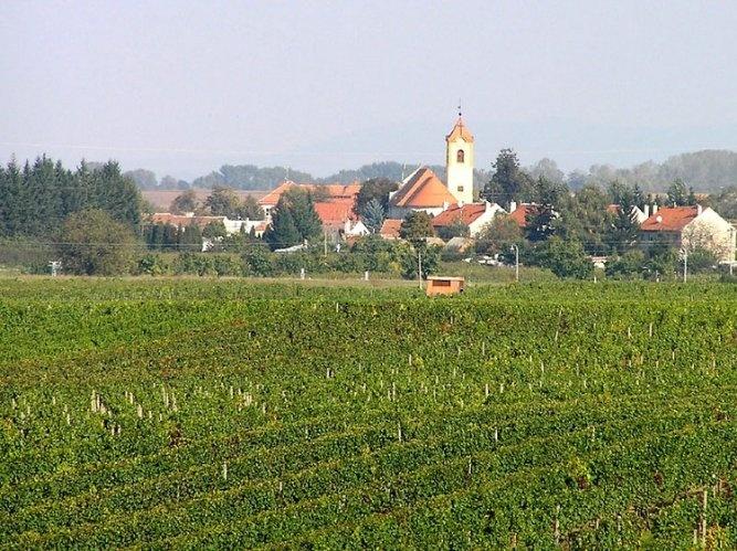 Jarní otevřené sklepy Moravská Nová Ves 2020