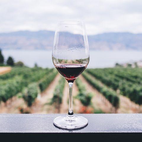 Autentická vína aneb zpět ke kořenům
