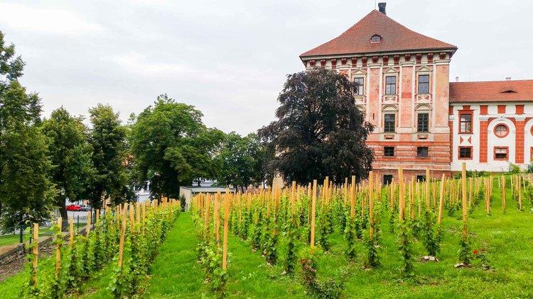 Rozhovor: Lobkowiczké zámecké vinařství Roudnice nad Labem