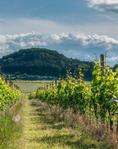 Pranostiky související s vínem