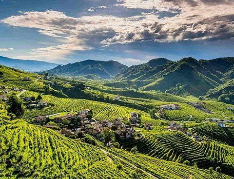 Prosecco – původně odrůda, dnes název oblasti, ve které se vyrábí výborné šumivé víno