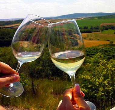 11 tipů na vinařské pěší trasy