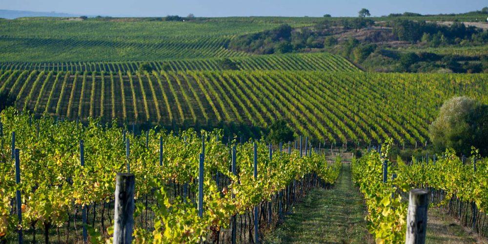 Znojemsko – Víno a turistika