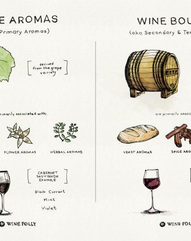 Základní informace o vinném aroma a buketu