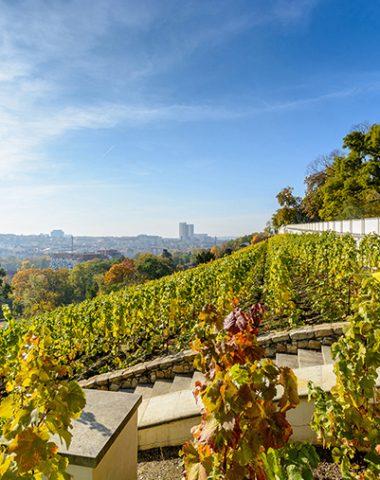 Grébovka: vinařské srdce hlavního města
