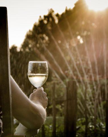 Bílé víno v našem prostředí