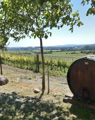 Sezóna výletů Krajem vína po Moravských vinařských stezkách je zde. A pomáhá se obcím poničeným tornádem.