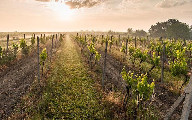 Mělnická podoblast – na víno nejen na Moravu, ale i do Čech